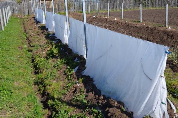 Укрытие винограда агроволокном на зиму